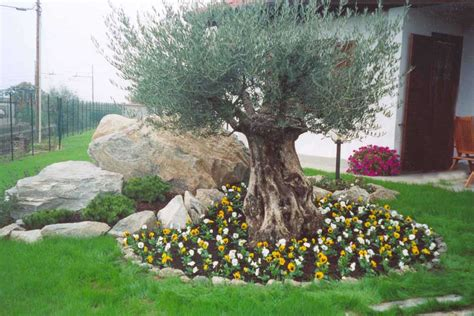 idee giardino roccioso idee per giardino roccioso idee per la casa phxated