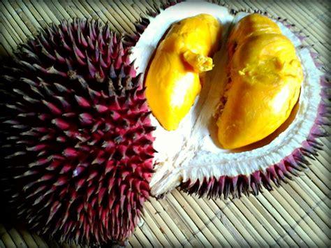 buah buahan unik khas kalimantan part  folks  dayak