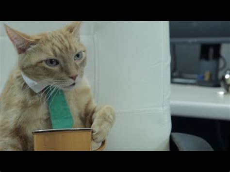 Office Cat by Cat Office