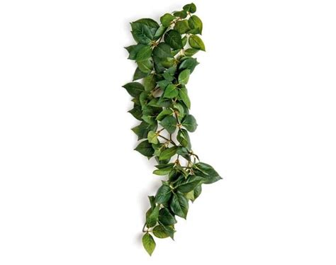plant vine related keywords suggestions plant vine long tail keywords