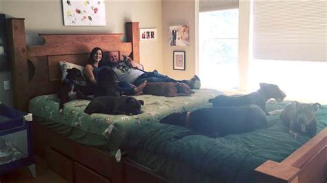 giant beds couple creates giant bed to sleep comfortably with 8 dogs today com