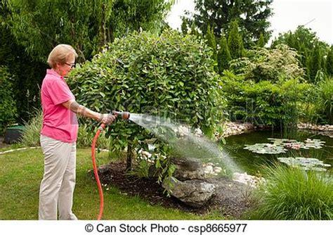 imagenes regando jardines image de personne agee femme arrosage jardin csp8665977