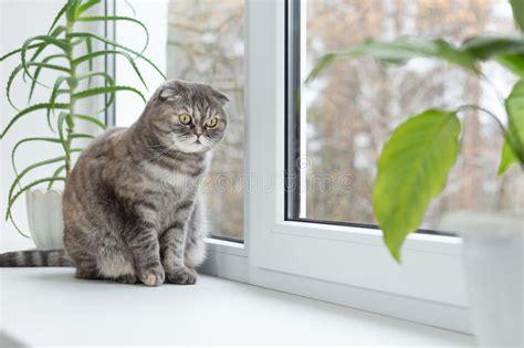 fensterbrett katze katze sitzt auf dem fensterbrett und schaut heraus das