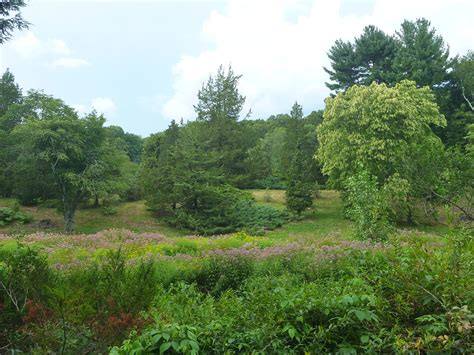 Arnold Arboretum Landscape Institute Trailing Ahead Trails Trees And Tranquility The Arnold