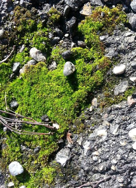 top 28 symbolism of moss moss cion definition meaning green agate meaning download images
