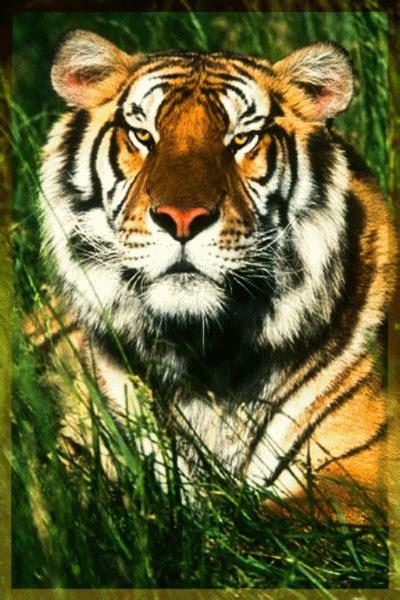 imagenes animales bellos 161 bonitos rostros animales 10 gifs gifmaniacos es