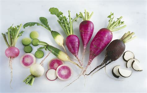 Living Room Decorating Ideas For Small Spaces types of radishes from tiny to giant