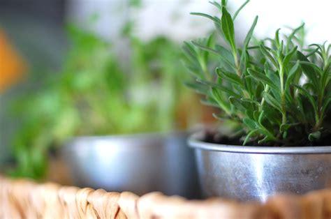 diy indoor garden the diy guide to indoor gardening