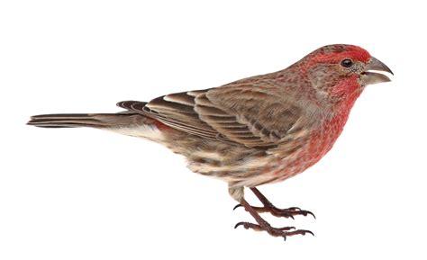 bird stuff bird house habitat boise idaho 208 375 8051
