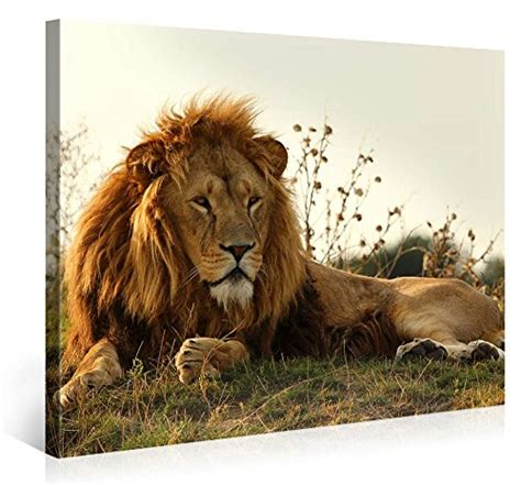 Hermosa Wall Decor 40x30 large canvas print wall majestic 40x30 inch animal canvas picture stretched on a
