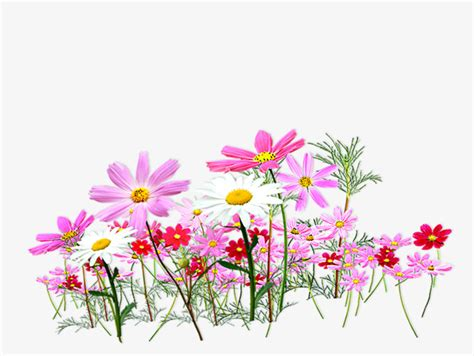 Garden Decoration Png by Pink And Fresh Flower Garden Decoration Pattern Flower