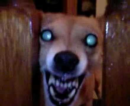 evil dogs top 6 scariest looking dogs