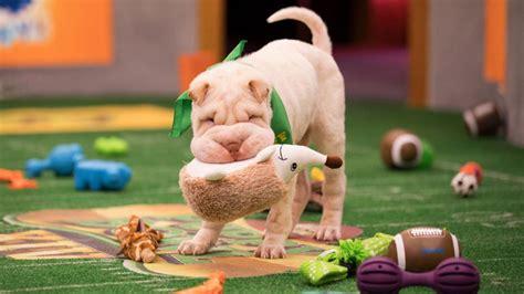 puppy bowl highlights puppy bowl 2018 highlights deserve a of appaws nerdist