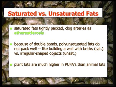 carbohydrates vs fats ppt lecture 5 lipids and carbohydrates powerpoint