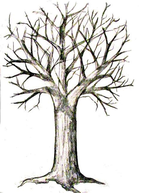tree to draw easy tree drawing with roots www pixshark images