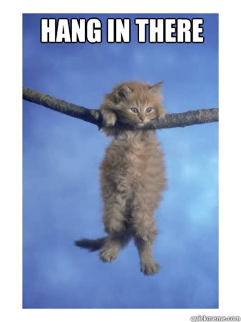 Hang In There Cat Meme - hang in there hang in there kitty quickmeme