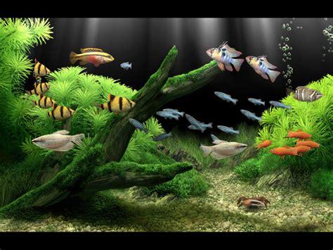 wallpaper bergerak untuk pc windows xp dream aquarium indir ekran koruyucu tamindir