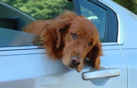 how to remove dog hair from car upholstery how to remove pet hair in 3 steps professional