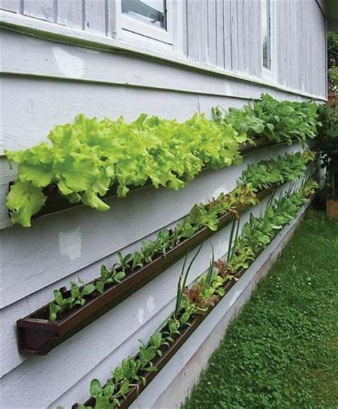 Vertical Garden Lettuce by 25 Creative Diy Vertical Gardens For Your Home