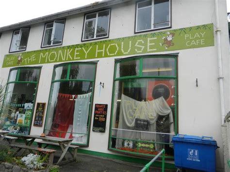 the monkey house monkeys review of the monkey house dawlish england tripadvisor