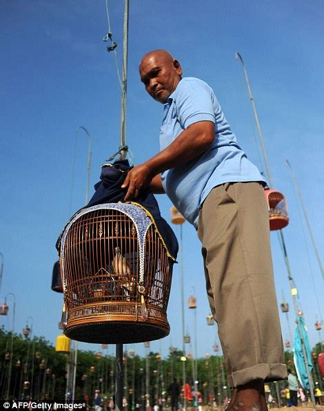 829 best contests images on annual bird singing contest in thailand
