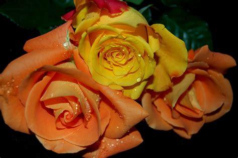 colori dei fiori i colori dei fiori la fiorista