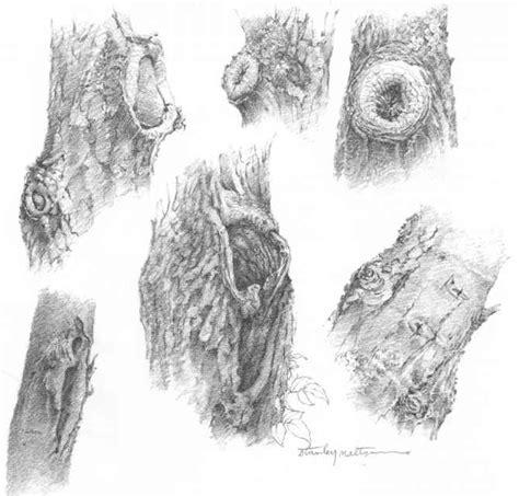 bark pattern drawing knotholes drawing nature joshua nava arts