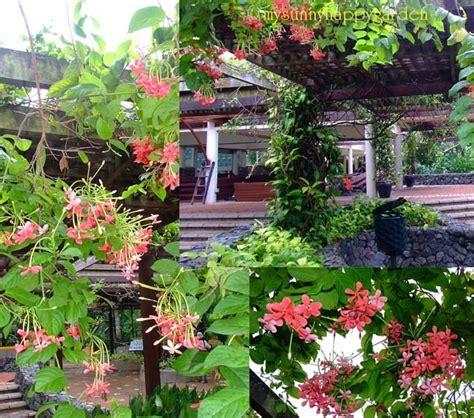 Botanical Garden Putrajaya My Happy Garden Vine Garden Botanical Garden