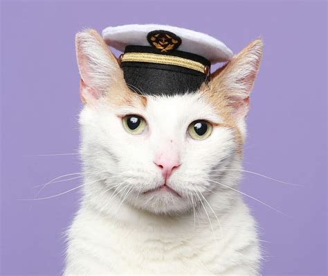 Cat Hats by 11 Best Cats With Hats Images On Caign