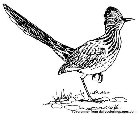 roadrunner bird coloring page texas roadrunner bird coloring pages roadrunner