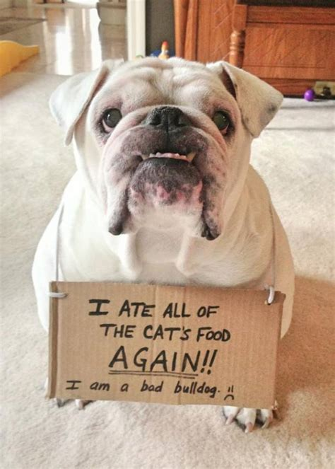 20  Really Funny Pictures of Dogs   EntertainmentMesh