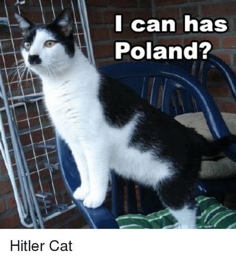 Cat In Suit Meme - i can has poland hitler cat hitler meme on sizzle
