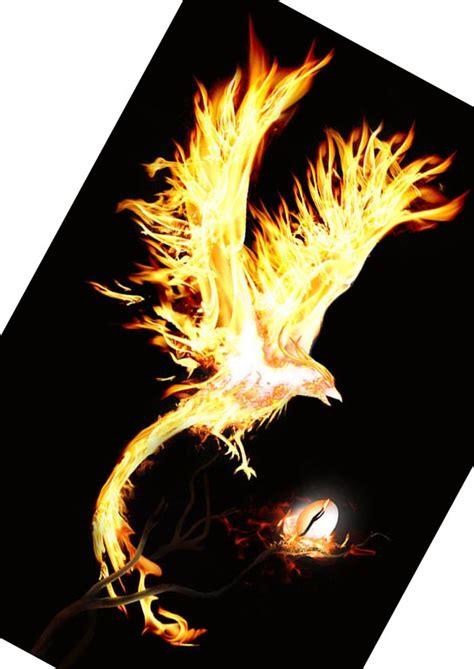 htc tattoo phoenix phoenix bird memes