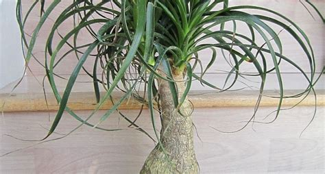 pianta appartamento piante da appartamento poca luce piante appartamento