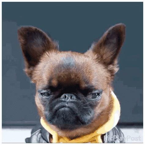 sad puppy gif popular thursday gif thursday sad discover gifs