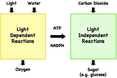 what is the purpose of a light dependent resistor in a circuit light dependent reaction light wiring diagram and circuit schematic