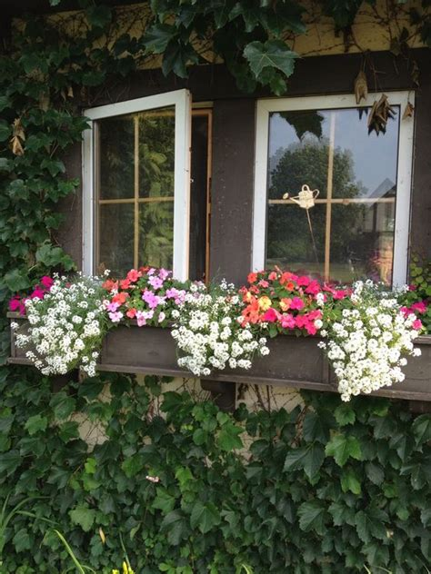 flowers for window boxes in sun window box flowers petunias and window boxes on