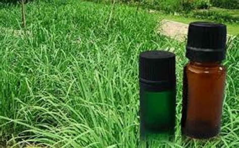 natural bug sprays to be banned for safety concerns in canada althealthworks com