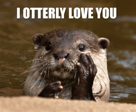 Otter Love Meme - adorable otters tumblr