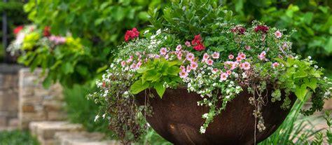 garten ratgeber winterschutz f 252 r k 252 belpflanzen gt garten ratgeber