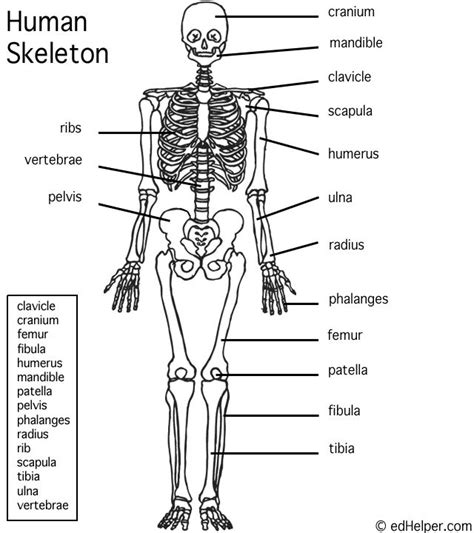 printable label the skeleton pinterest the world s catalog of ideas