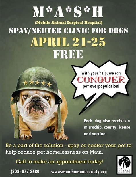 free neutering for dogs free spay neuter clinic for dogs mauiwatch