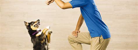 free puppy classes at petsmart petsmart puppy classes petsmart