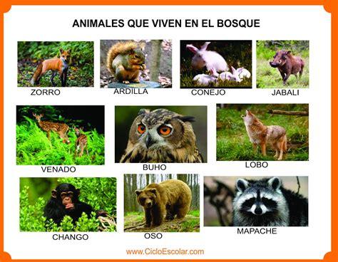 Imagenes Animales Que Viven En El Bosque | animales que viven en el bosque selva mar r 237 os