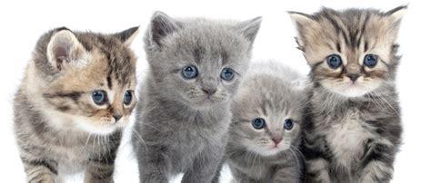 l arriv 233 e d un nouveau chaton