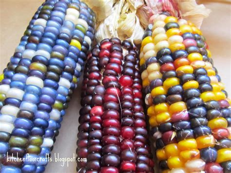 28 best why is indian corn different colors indian corn images indian corn from plots on the