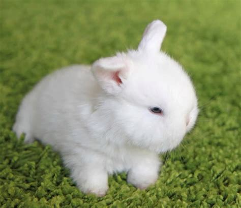 Bunny White white bunny pictures www pixshark images