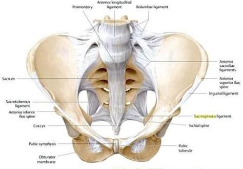 pelvic area diagram 301 moved permanently
