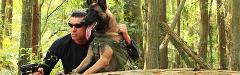 protection dogs for sale personal protection dogs for sale