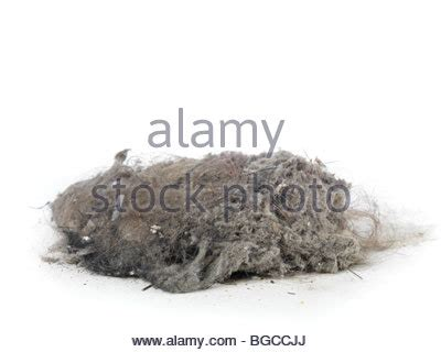Vacuum Cleaner Ophelia dust stock photos dust stock images page 8 alamy